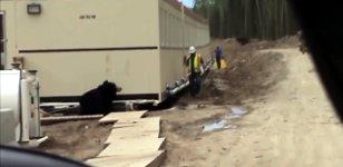 Bär erschrecken Bauarbeiter