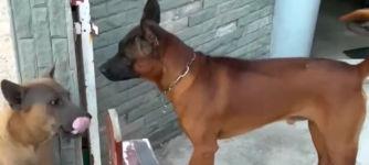 Hunde Zaun