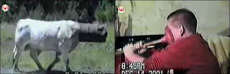 clipmix, pleiten, pech und pannen, homevideo