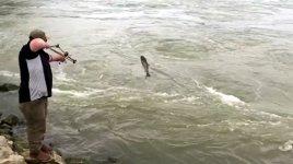 angeln fisch Pfeil Bogen