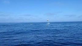 Angeln, Fischen, flying mako