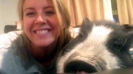 Virginia Pig Schwein
