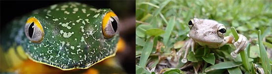 Fakten über Frösche, Frogs