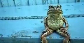 frosch, frog, sitzen