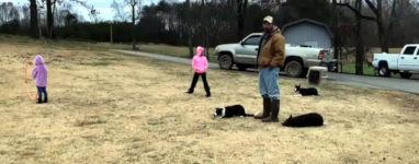 Hunde Gänse