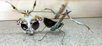 Gangster Insekten