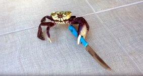 Gangster Krabbe mit Messer