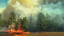 Waldbrand, Feuer, Wind, Feuerwehr