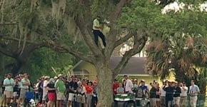 Golf, Baum