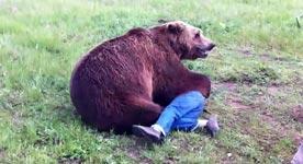 Grizzlybär, Grizzly Bear