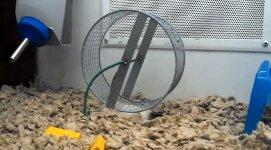 Hamster Hamsterrad