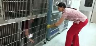 Veterinärtechniker Katze