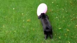 Hase, Luftballon