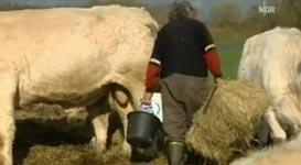 Hermann und das liebe Vieh