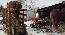 Holz spalten, Pferd