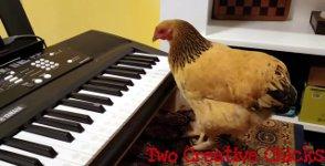 Huhn spielt Klavier