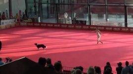 Hund Ballett