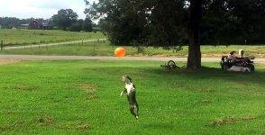 Hund Luftballon