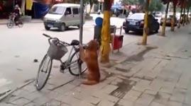 hund, fahrrad, fahrradschloss
