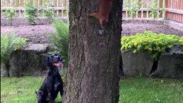 Hund Eichhörnchen Baum