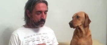 Hund Essen wegsehen