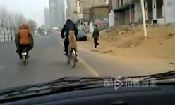 hund, fahrrad, gepäckträger, china