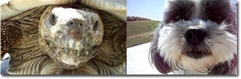Hund, Schildkröte, Turtle, Dog, Panzer