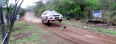 Hund Glück Rally