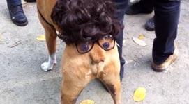 Halloween Kostum Des Tages Hund Mit Arschgesicht Butthead