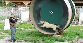 Hund, Gassi, Hamsterrad, Energiegewinnung