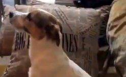 Hund Horrorfilm