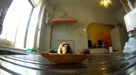 Hund hat Hunger