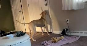 Hund Schatten Schwanz
