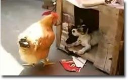 hund liebt Huhn