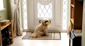 Hund, Briefe, Briefkasten, Post