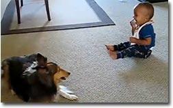 Hund spielt mit Kind