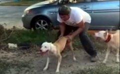 Hund springt Rekord