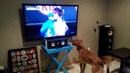 Hund, Tennis