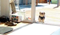 Hund Terrassentür
