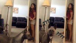 Versteckspiel mit Hund