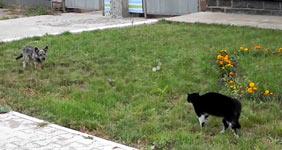 Showdown, Hund, Katze