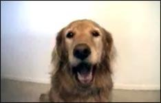 Hund, schnappen