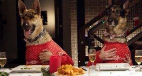 Lustige Bilder Weihnachtsessen.Tierisches Weihnachtsessen Hunde Und Katzen Am Tisch Lustige