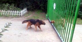 Hunde bellen Tor
