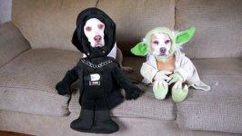 Hundekostüme zu Halloween