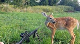 Reh, Jagd, Gewehr