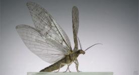 Insektenflug Zeitlupe