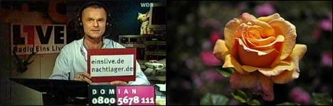 valentinstag, jule, rose, penis