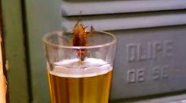 Kakerlake Küchenschabe Bier