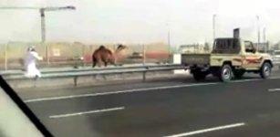 Dubai Kamel Flucht